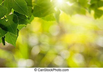 Rocío matutino, antecedentes naturales abstractos con bosques de verano