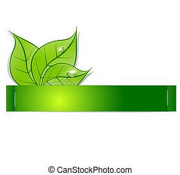 rocío, papel, tira, hojas, plano de fondo, verde, gotas, blanco