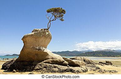 roca, árbol