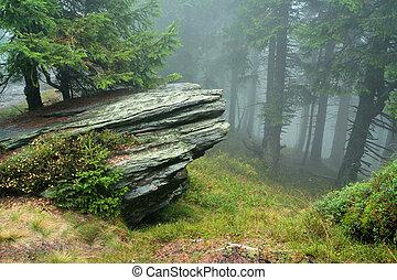 Roca en la niebla del bosque