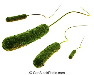 rod-shaped, bacterias