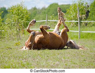 rodante, caballo