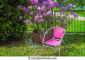 rododendro, grande, florecer, arbusto