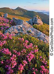 Rododendron en las montañas