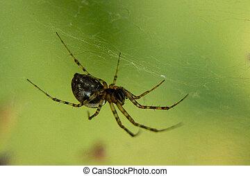 rogar, araña, esperar