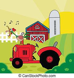 Rooster cantando en un tractor