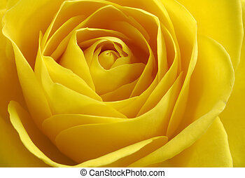 rosa, amarillo