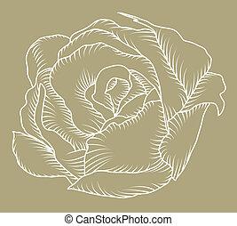 rosa, bosquejo