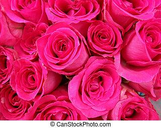 rosa, brotes