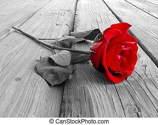 Rosa en madera