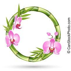 rosa, marco, aislado, círculo, verde blanco, flores, bambú, orquídea