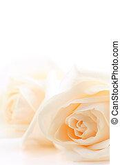 Rosas beige de fondo