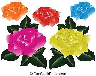 Rosas contra blancas