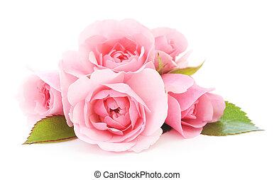 rosas, rosa