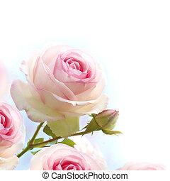 Rosas rosas de fondo, frontera floral con graduados de azul a blanco dedicados a una romántica tarjeta de amor, cerca de las flores.