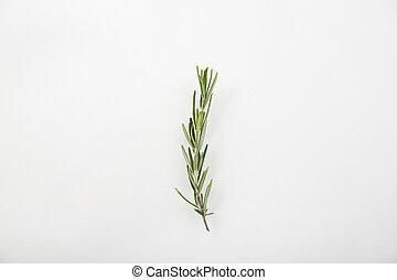 Rosemary aislada en fondo blanco