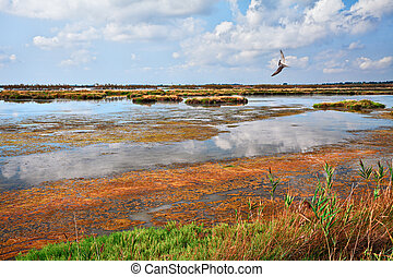 rovigo, naturaleza, parque, rosolina, veneto, laguna, delta, italy:, po, reserva