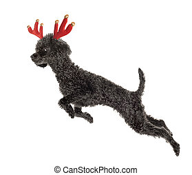 Rudolf el reno