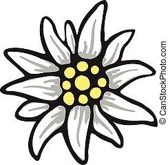 símbolo, alpes, flor, alemania, logotipo, alpinism, edelweiss
