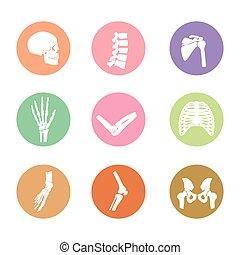 Símbolo de huesos en el cuerpo humano