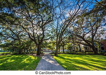 sabana, parque, musgo, georgia., forsyth, sendero, español, árboles