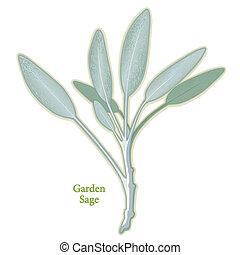 sabio, jardín de hierba