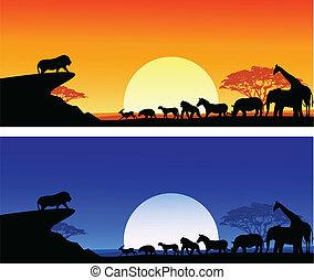Safari silueta