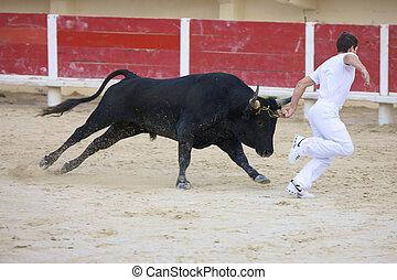 saintes, europa, 29, octubre, europa, 2008:, la, de, -, arena, maries, francia, camargue, mer, bullfight, frankreich, provence