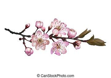 Sakura flores de fondo