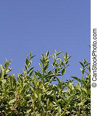 Sal del arbusto en un fondo de cielo azul
