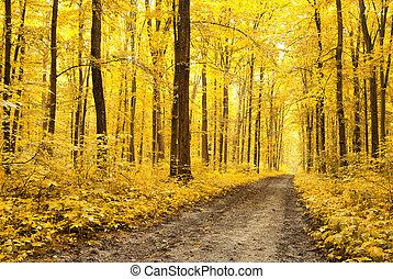 Sale en el bosque de otoño