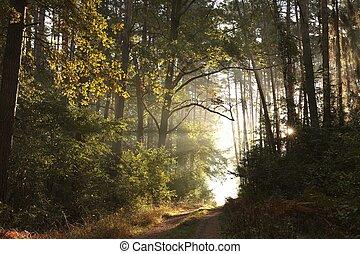salida del sol, bosque de otoño