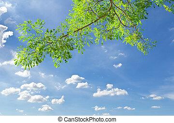 Salida verde contra el cielo azul
