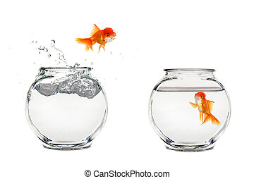 Saltar peces de colores