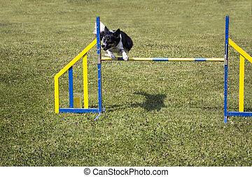 Salto de agilidad de perro