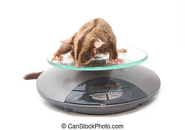 Salud animal, planeador de azúcar en escalas de peso
