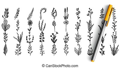 salvaje, garabato, conjunto, plantas