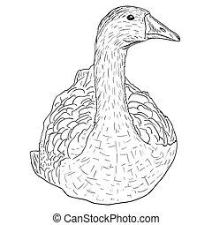 salvaje, goose.