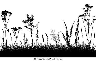 salvaje, plantas, field., grass., malas hierbas, separado, vector, illustration., pasto o césped, siluetas