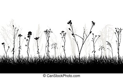 salvaje, plantas, malas hierbas, meadow., vector, illustration., silueta