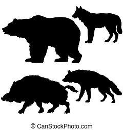 salvaje, siluetas, oso, plano de fondo, verraco, lobo, hiena, blanco