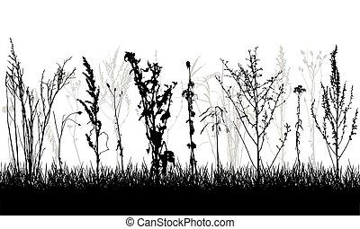 salvaje, weeds., vector, illustration., silueta, grassland., plantas, diferente