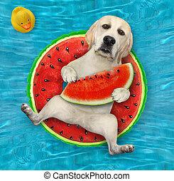 sandía, círculo, perro, piscina