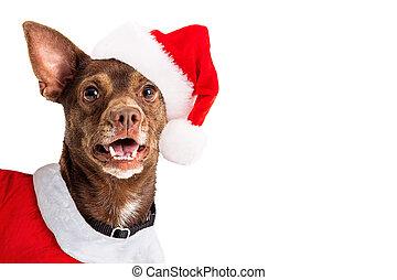 santa, alegre, perro, navidad, claus