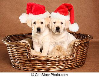 Santa Cachorros