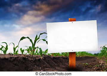 Señal en blanco en el campo agrícola de maíz