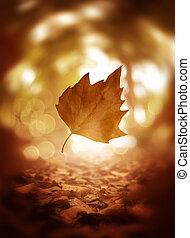 Se acercan las hojas de otoño