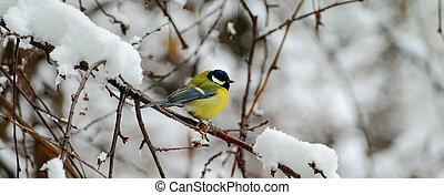 se sienta, photo., de par en par, árbol, winter., titmouse, rama