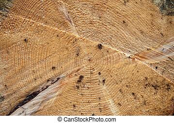sección, cruz, árbol