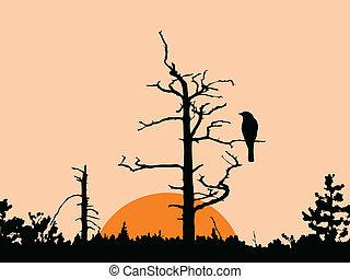seco, árbol, vector, silueta, pájaro